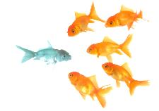 Unique color fish